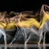Motion-Sculpture-Danse-B9593-