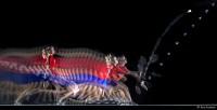 Badminton avec le procédé Motion Sculpture. Conseil Général de la Meuse